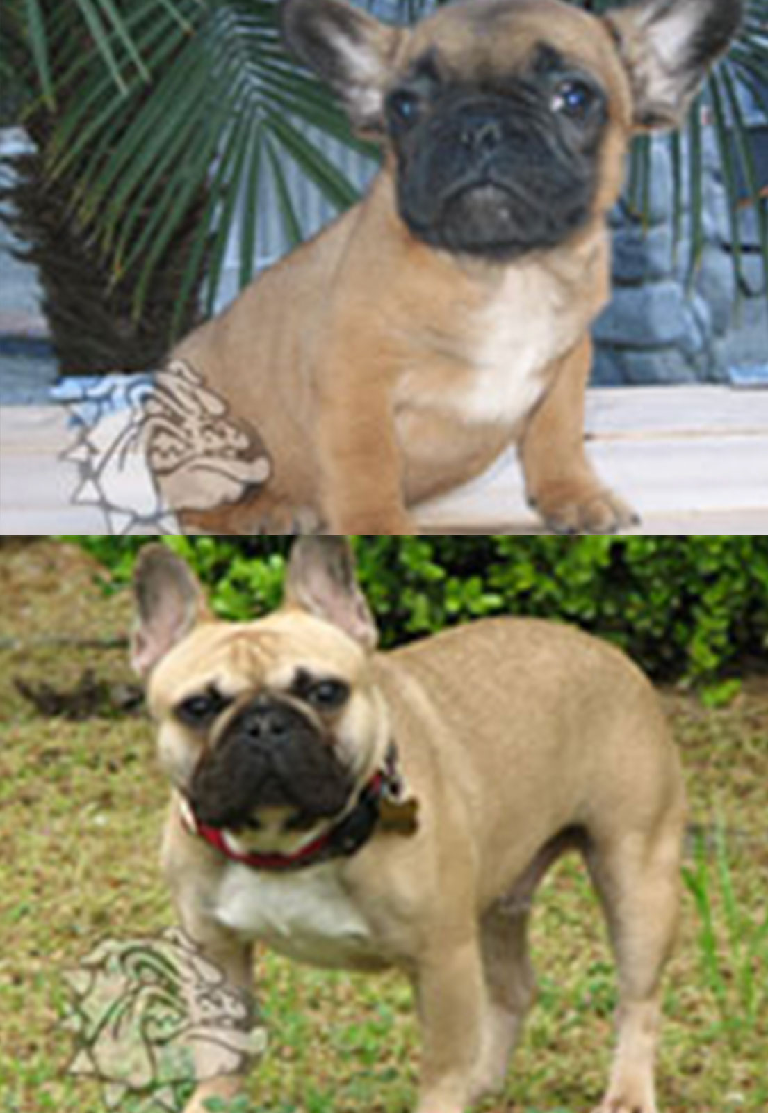 BEFORE-AFTER-BUBBA
