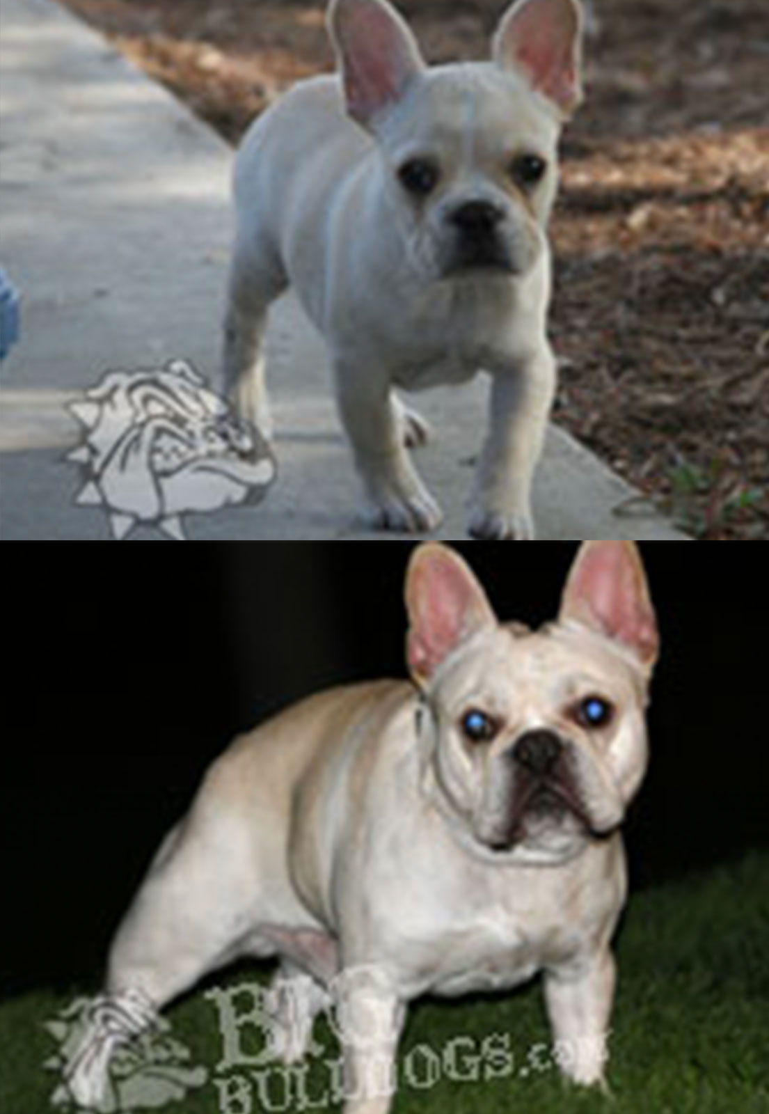 BEFORE-AFTER-PESCI
