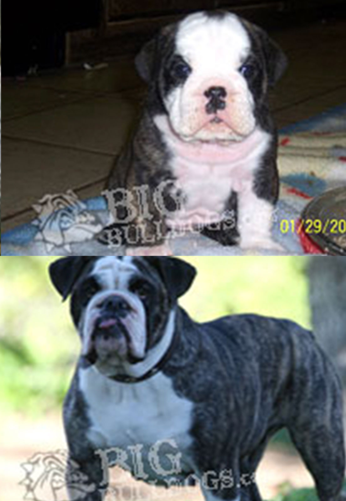BEFORE-AFTER-ROCKELLE
