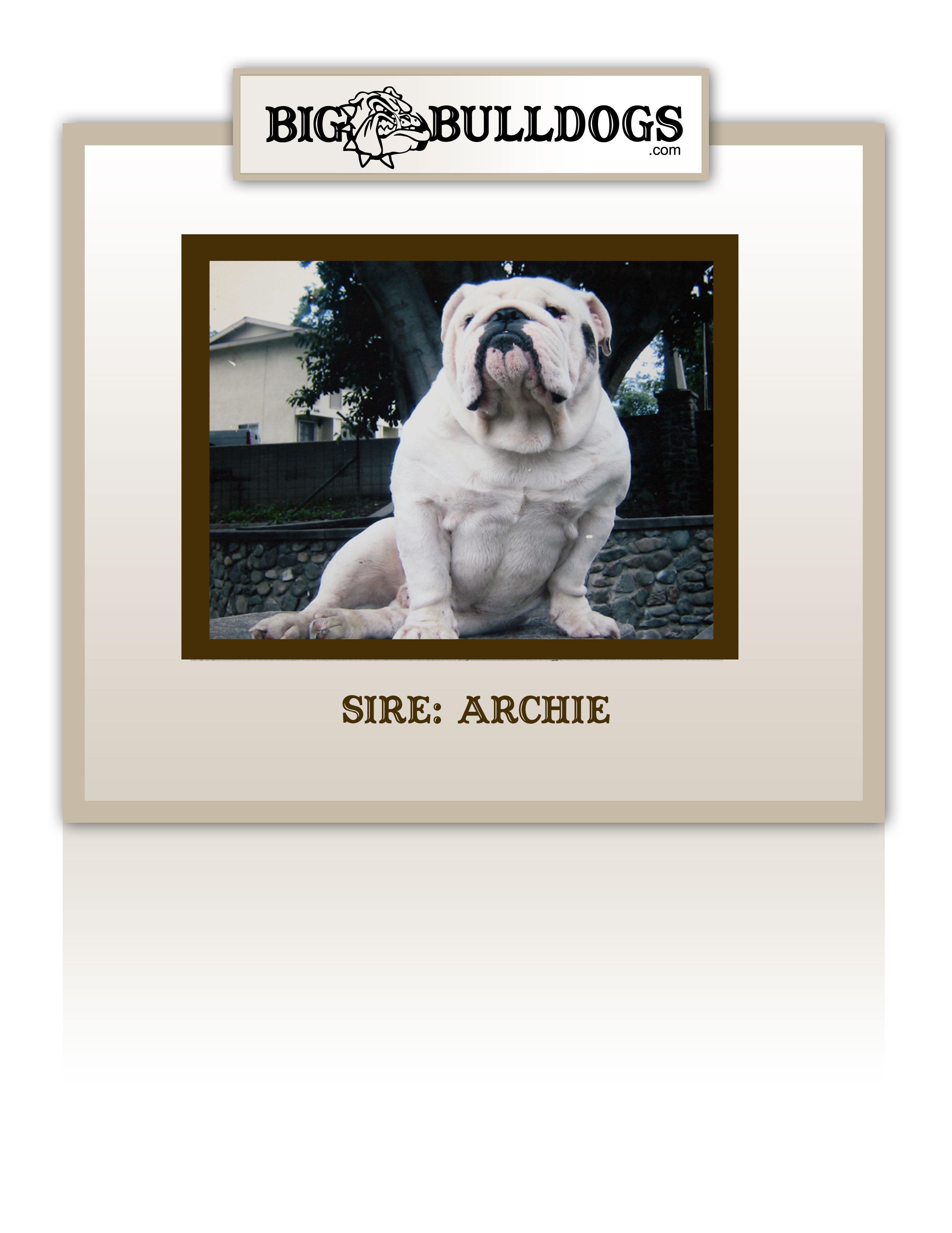 ARCHIE-M