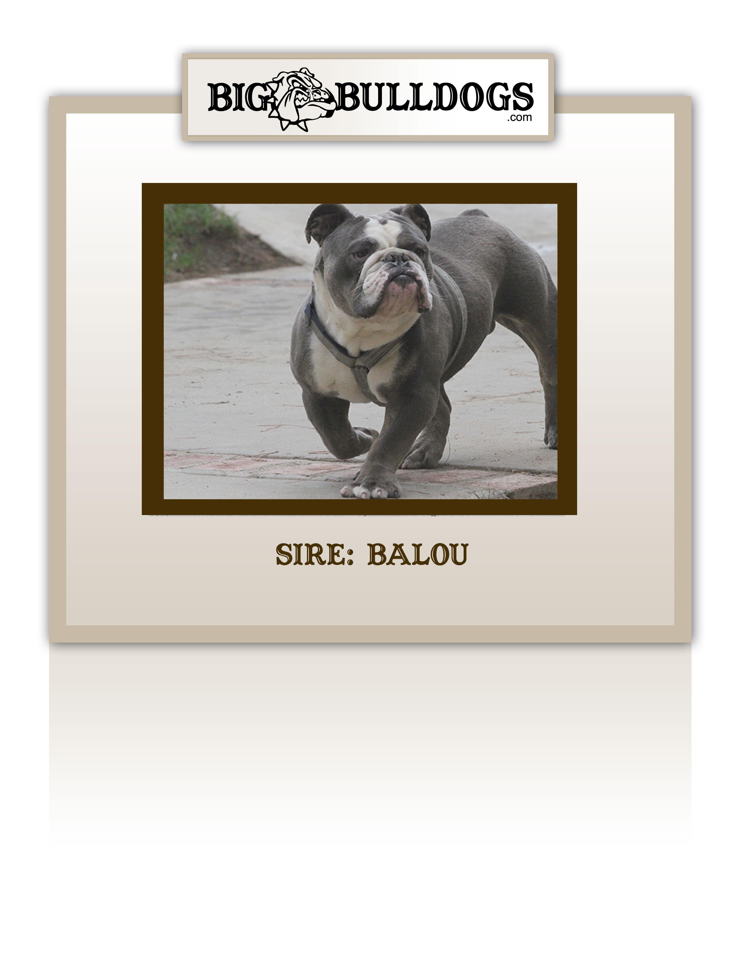 BALOU2-M