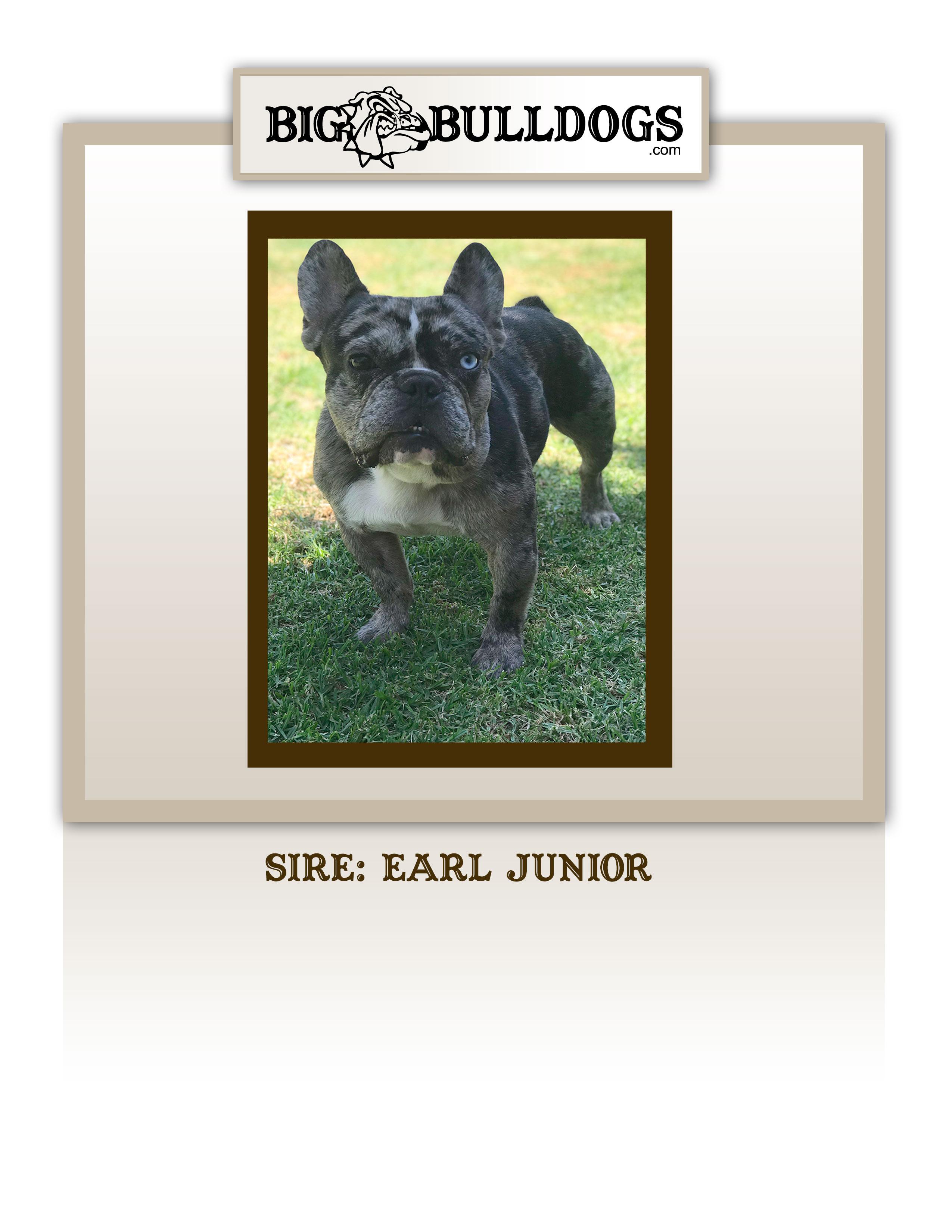 EARL-JUNIOR-M