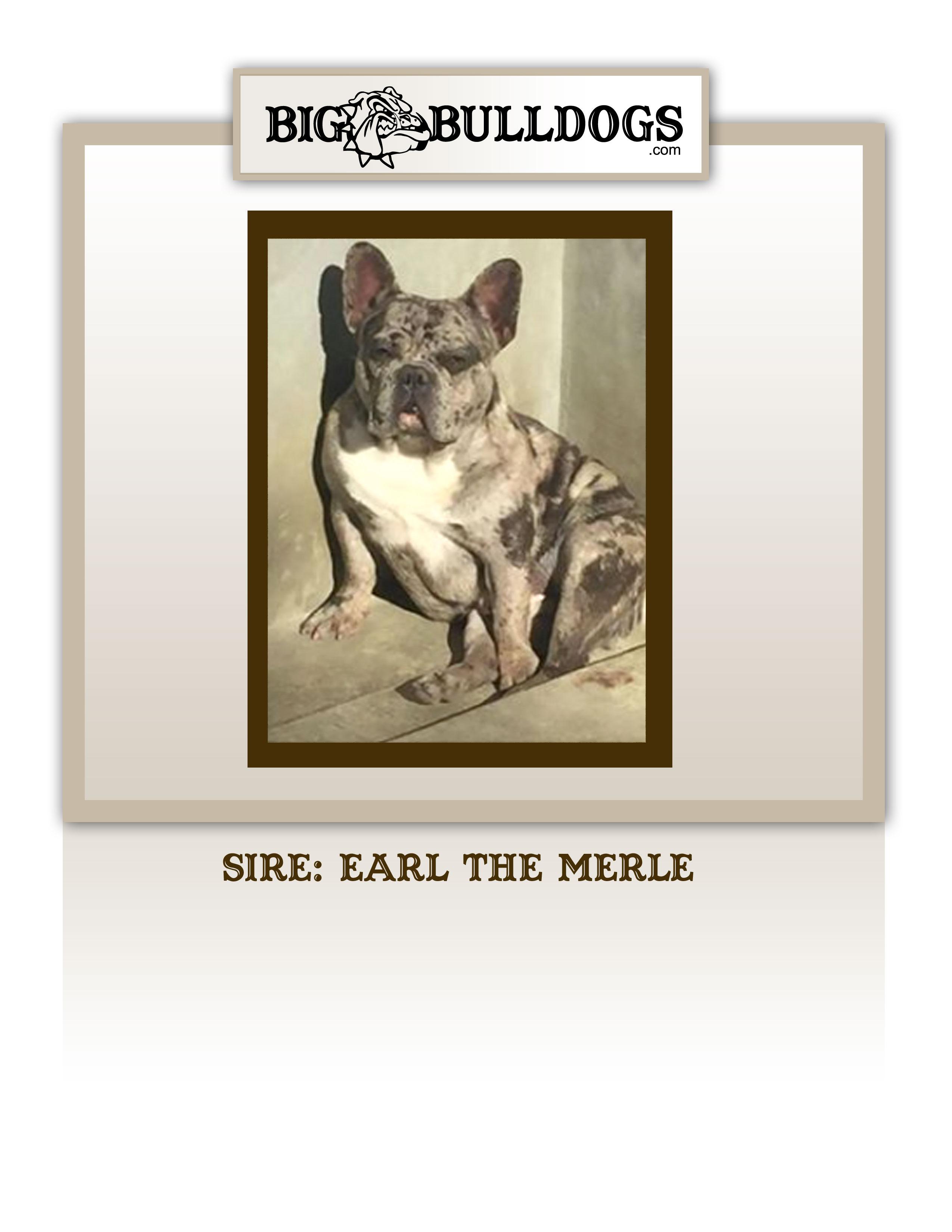 EARL-THE-MEREL-M