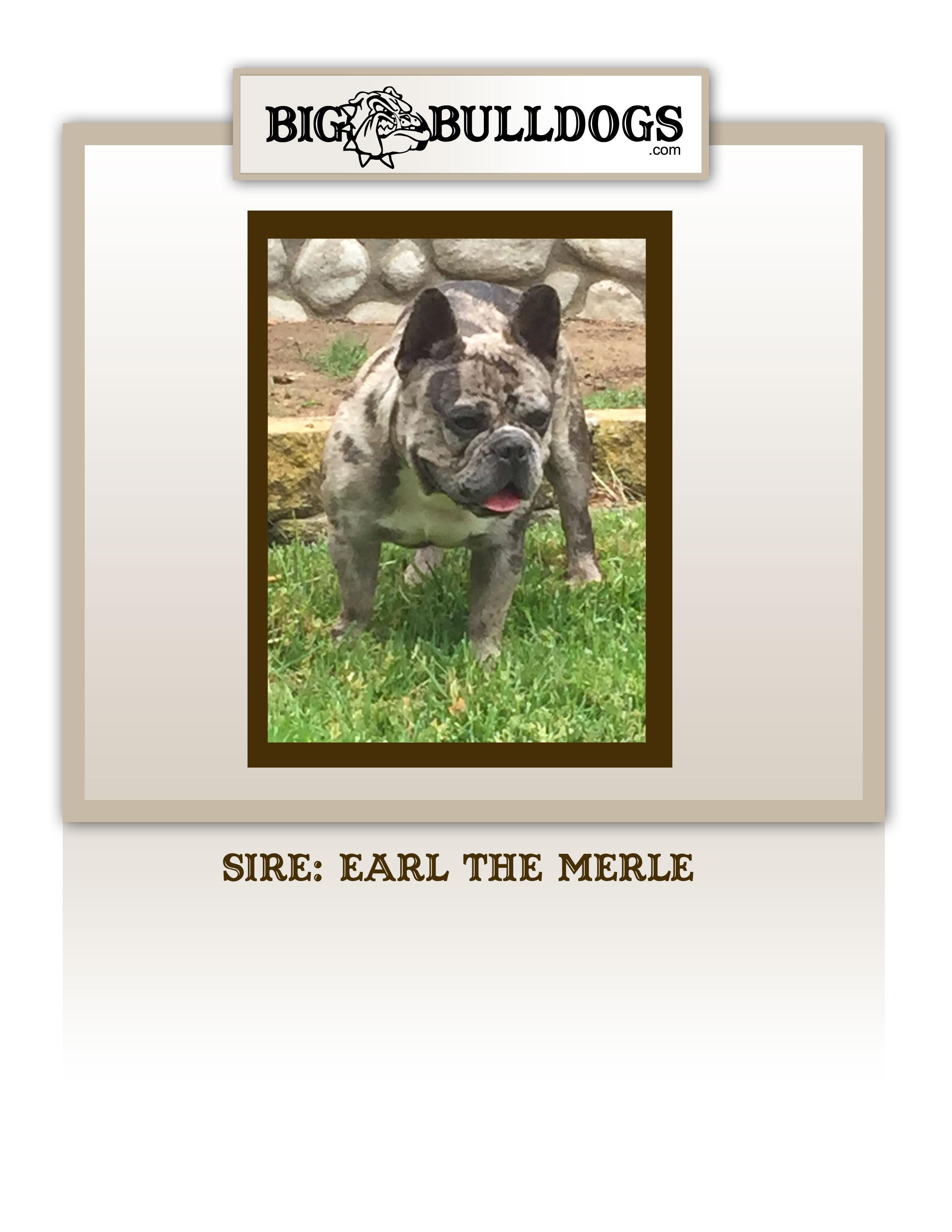EARL-THE-MERLE2-M