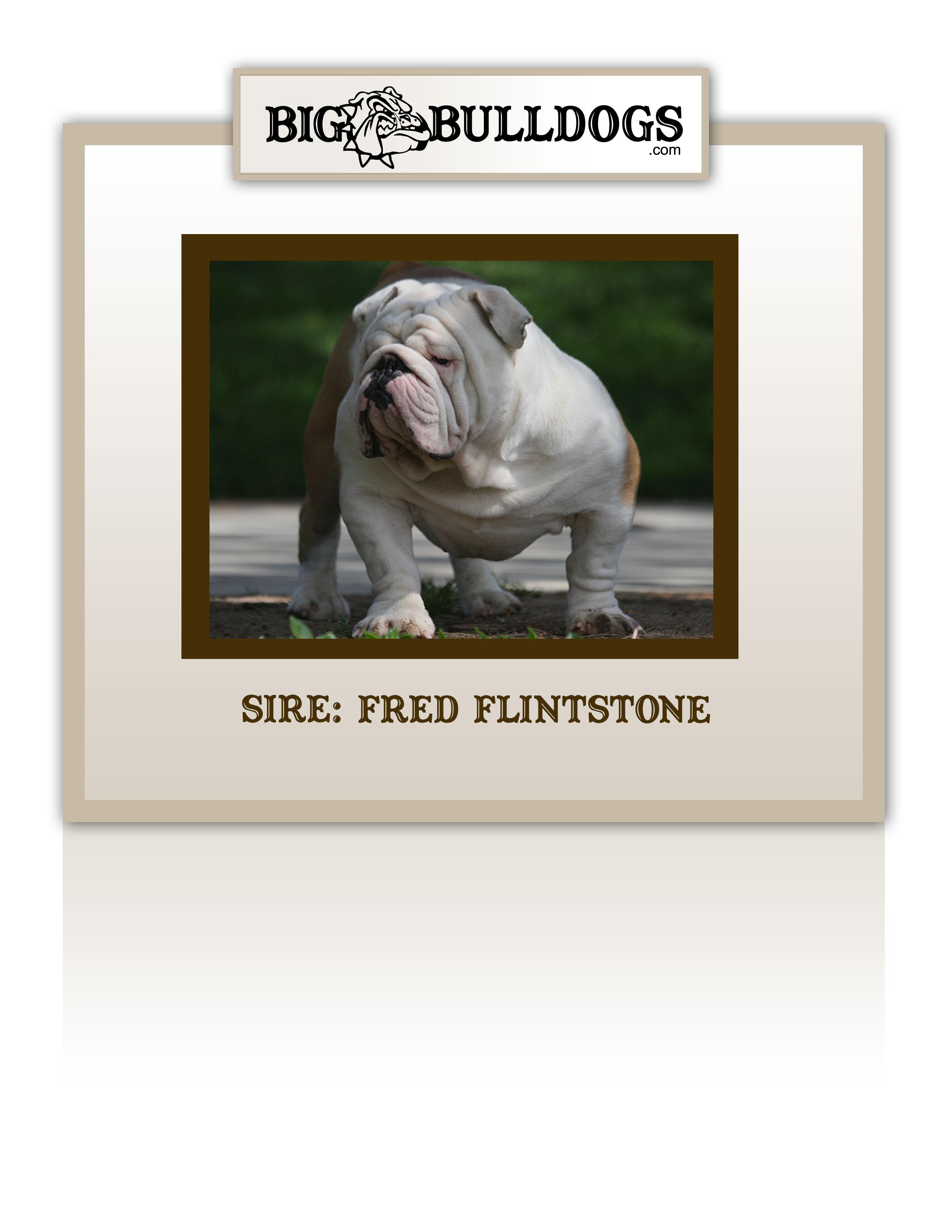 FRED-FLINTSTONE-M