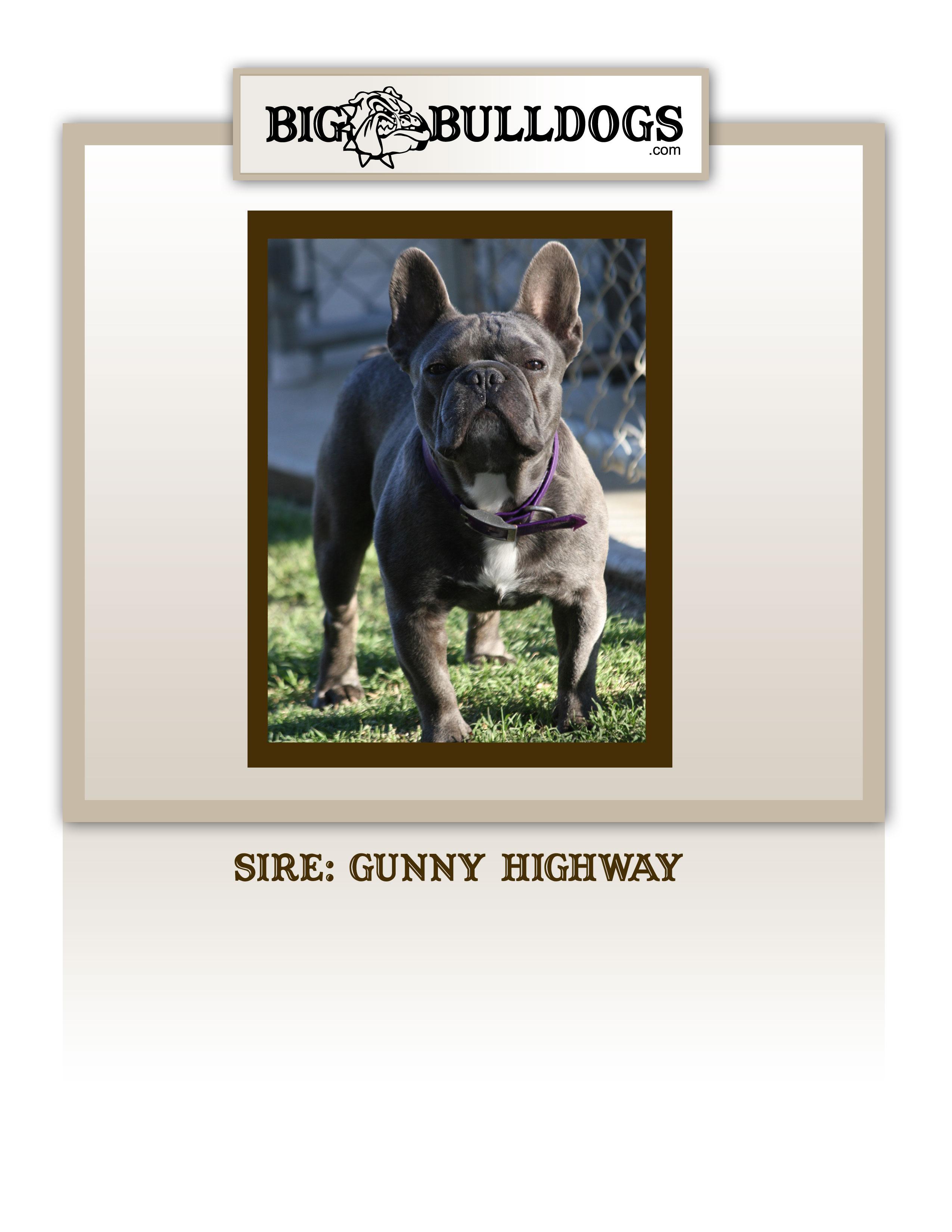 GUNNY-HOWARD-copy