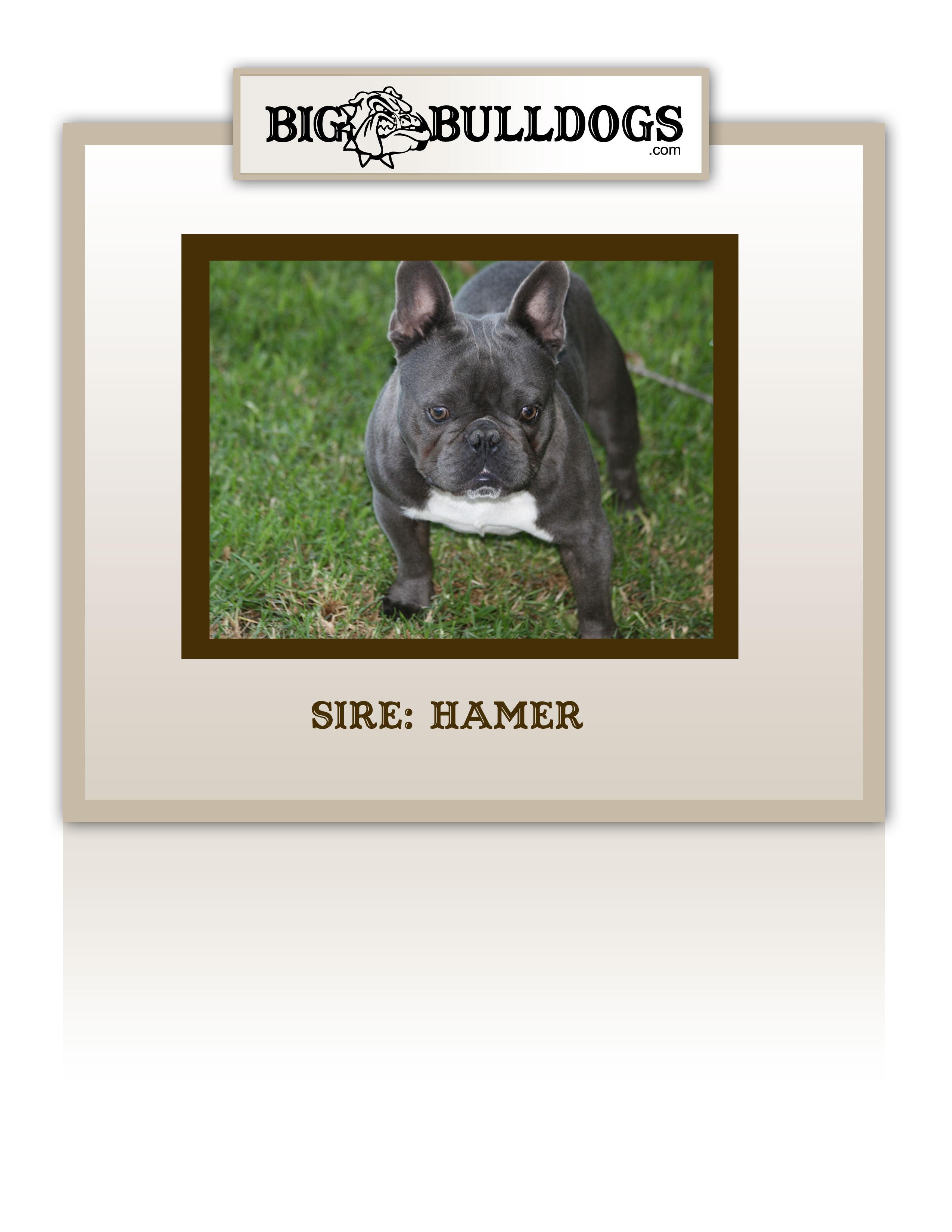 HAMMER-HOWARD-copy
