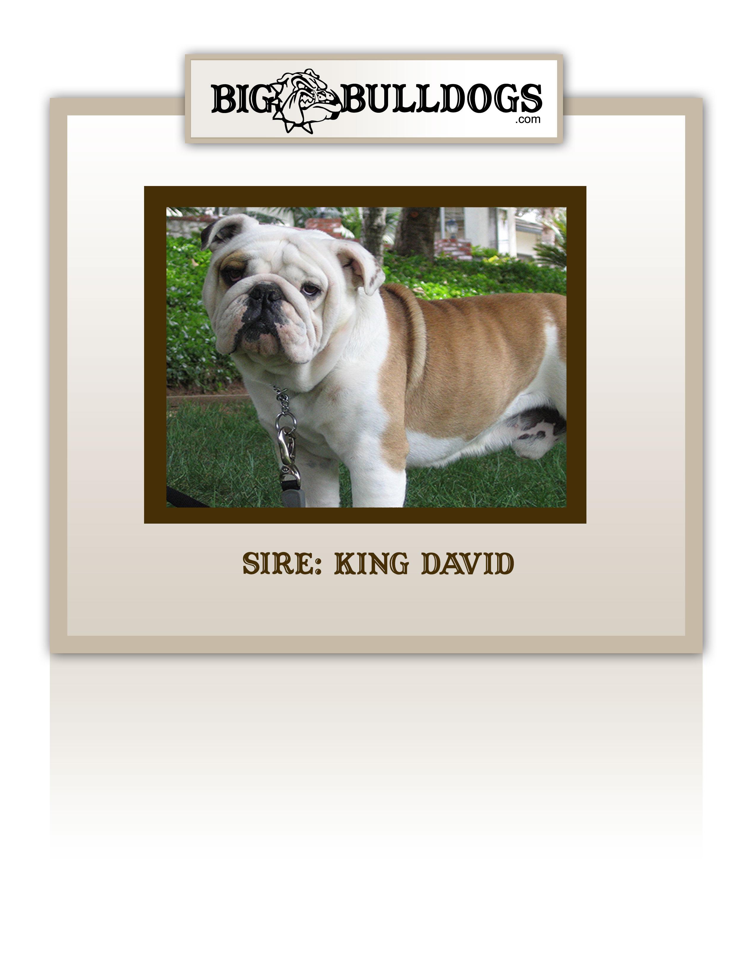 KING-DAVID-M
