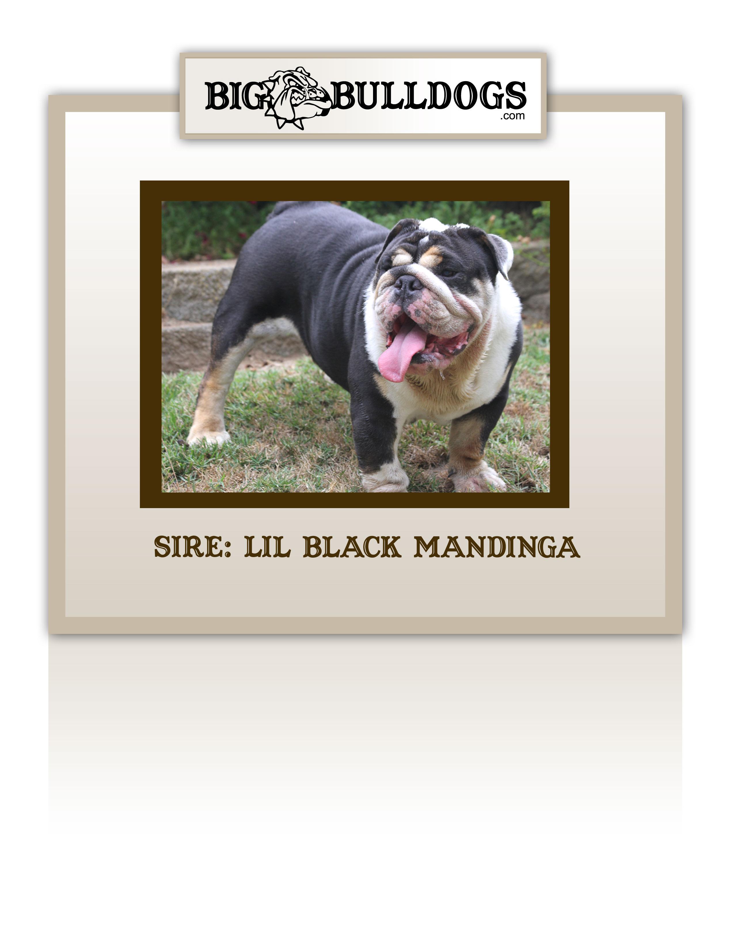 LIL-BLACK-MANDINGA-M