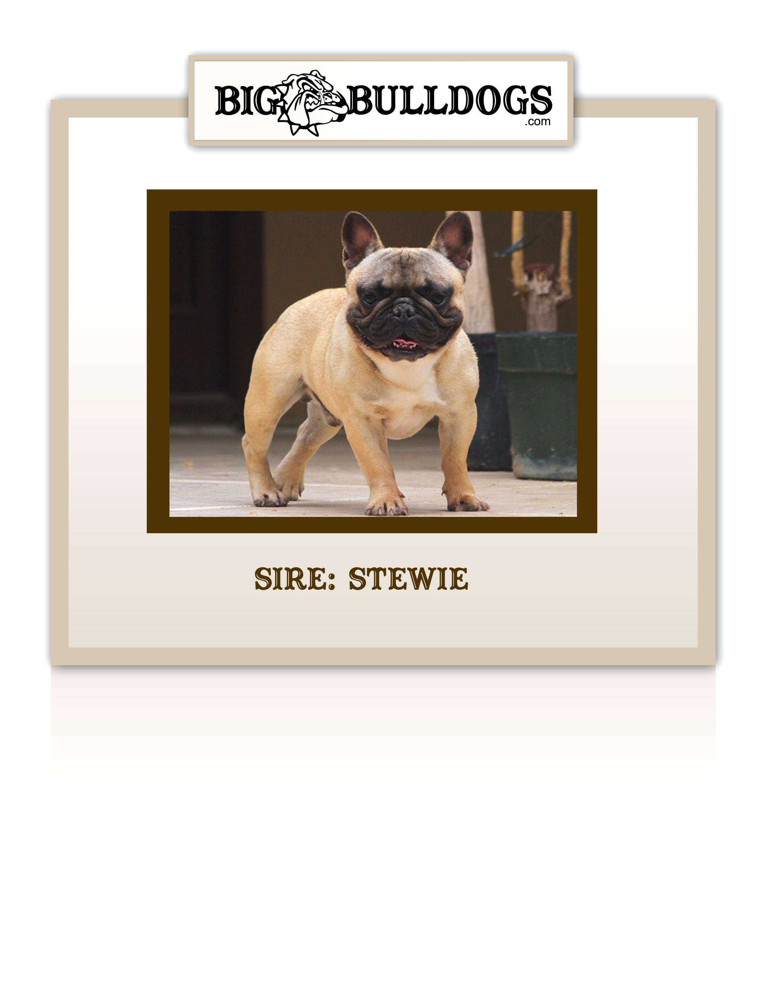STEWIE-M
