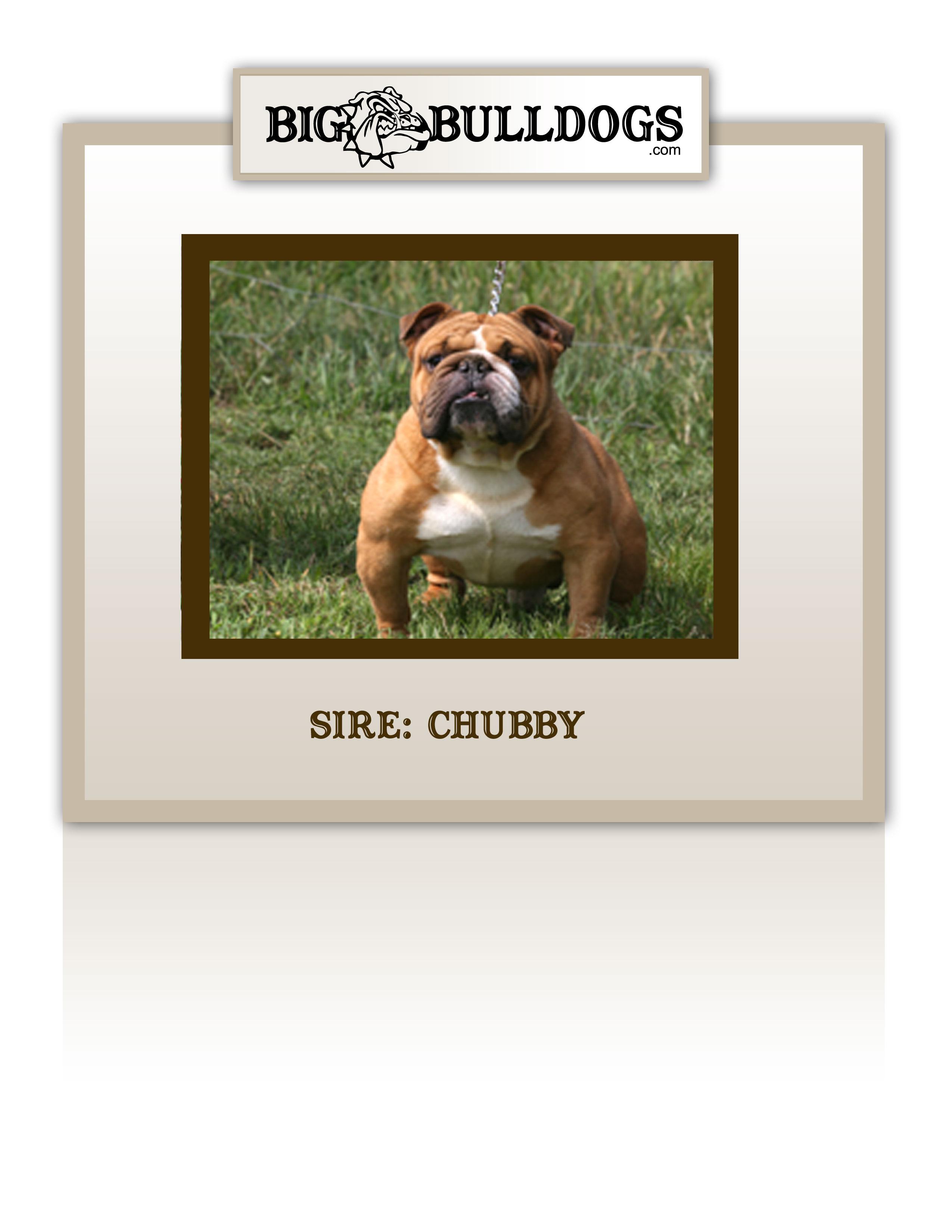 chubby2