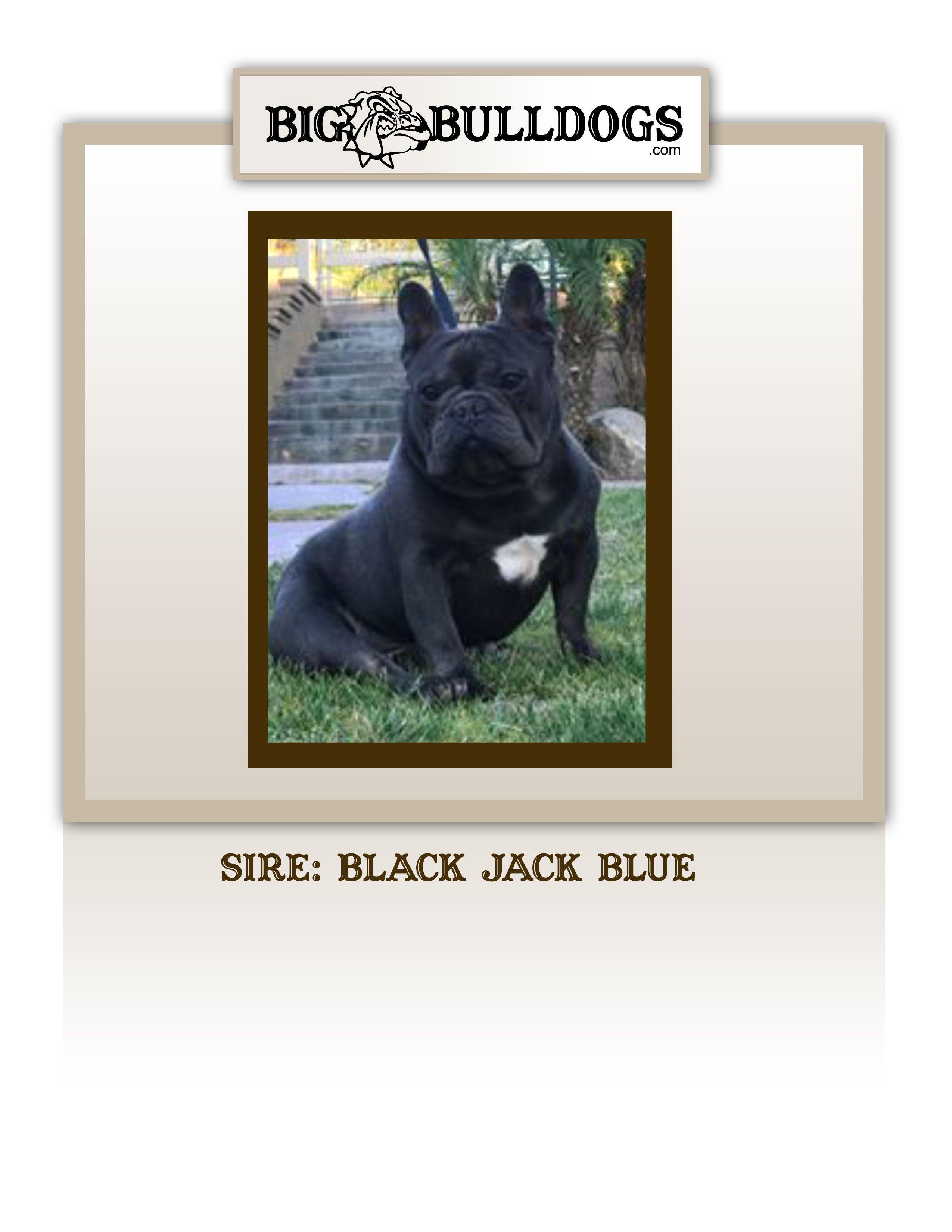 BLACK-JACK-BLUE-M